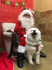 The same white fluffy dog sits next to a person in a Santa Claus costume against a backdrop of Christmas decorations. The dog appears to be grinning widely at the camera.