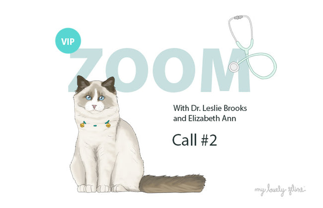 Zoom Recap: Feline Wellness & Behavior—Call #2
