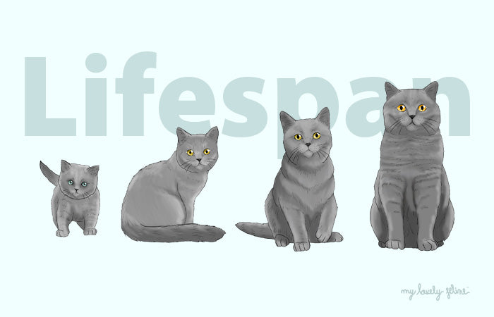 What's The Average Cat Lifespan?