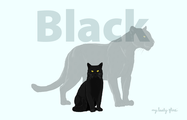 Black Cats—Everything You Should Know