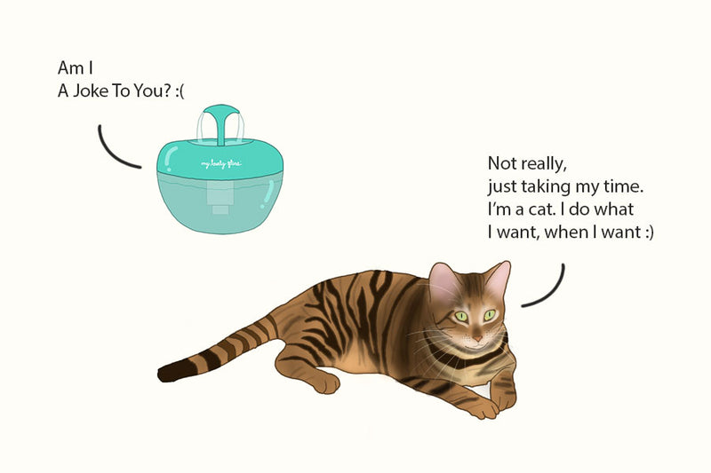 Is your cat ignoring the fountain? Try this!