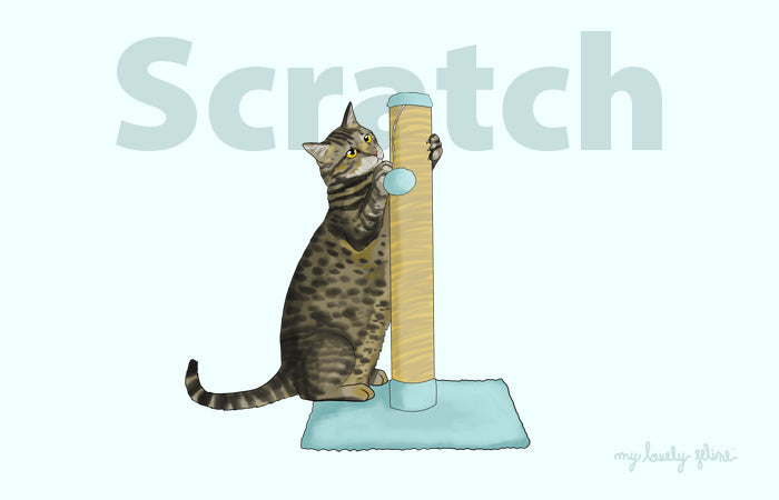 Why Do Cats Scratch & How to Keep Your Furniture Safe