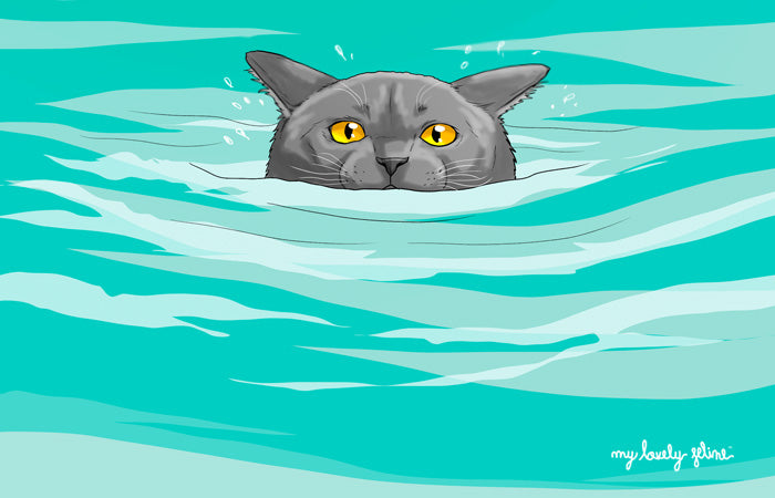 Can Cats Swim? Facts & Theories That Might Surprise You