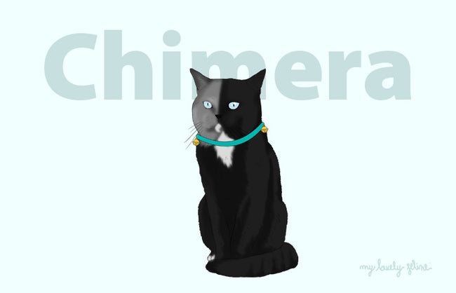 What Is A Chimera Cat?