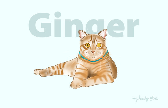 Everything You Should Know About Ginger Cats