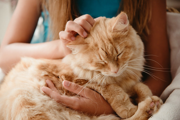 Feline Grooming; What should you know?