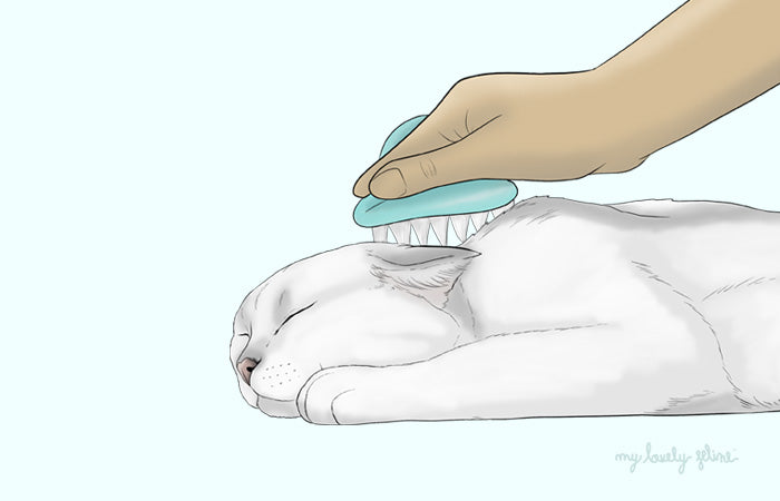 How to Properly Groom Your Cat at Home—By Dr. Leslie Brooks