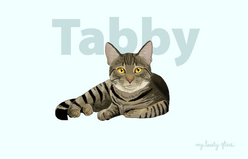Everything you should know about Tabby Cats