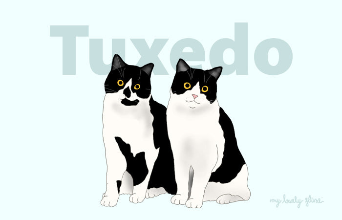 Everything You Should Know About Tuxedo Cats