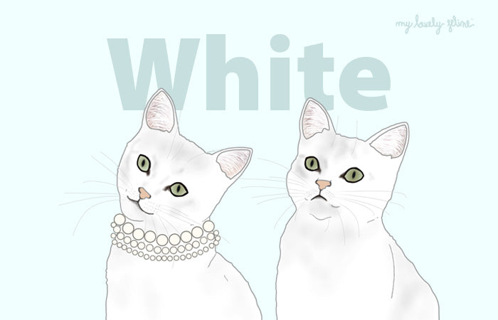Everything You Should Know About White Cats