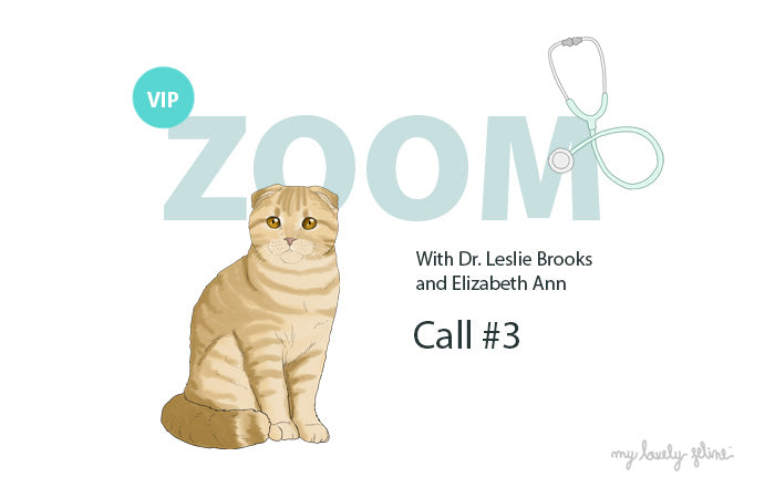 Zoom Recap: Senior Cats—Call #3