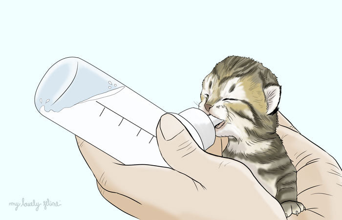 Kitten being fed with a milk bottle