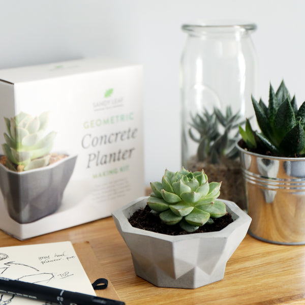 Geometric Concrete Planter Kit