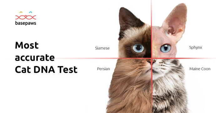 Cat DNA Test (Breed + Health)