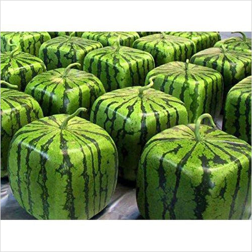Watermelon Mold Square Shape-Lawn & Patio - www.Gifteee.com - Cool Gifts \ Unique Gifts - The Best Gifts for Men, Women and Kids of All Ages