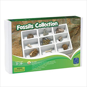 Educational Insights Fossil Collection-fossil collection - www.Gifteee.com - Cool Gifts \ Unique Gifts - The Best Gifts for Men, Women and Kids of All Ages