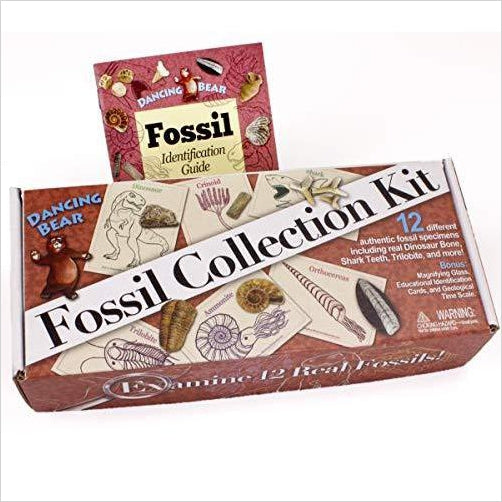 Fossil Collection (13 pc.) with ID Cards - Gifteee. Find cool & unique gifts for men, women and kids