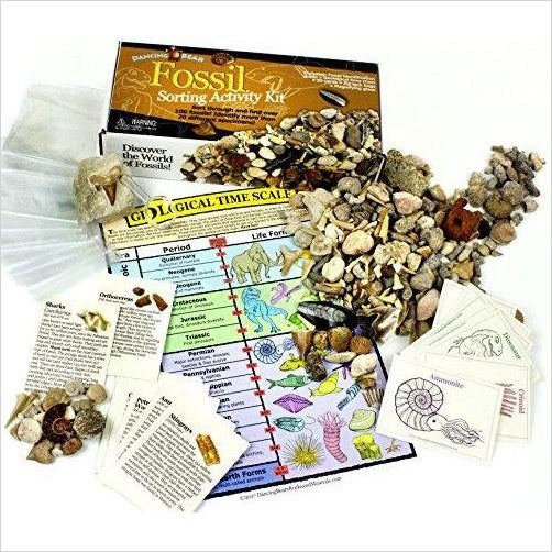 Fossil Collection Sorting Activity Kit - Find unique STEM gifts find science kits, educational games, environmental gifts and toys for boys and girls at Gifteee Cool gifts, Unique Gifts for science lovers