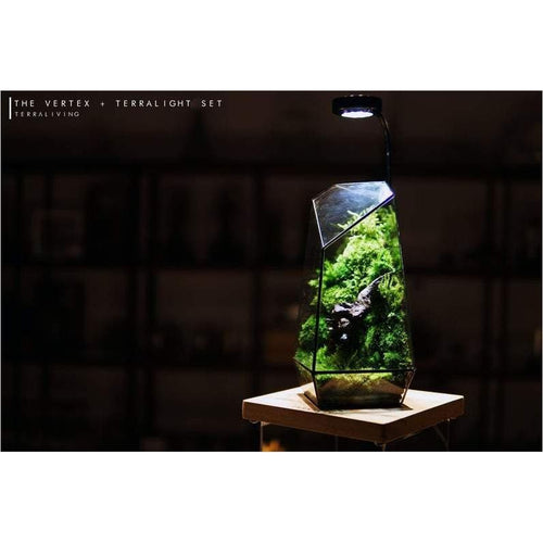 The Vertex ZERO (S) - Heart of Forest by Terraliving - Find unique decor gifts for the office and workplace, get cool gadgets for your office desk and cubicle at Gifteee Cool gifts, Unique decor Gifts for the office and workplace
