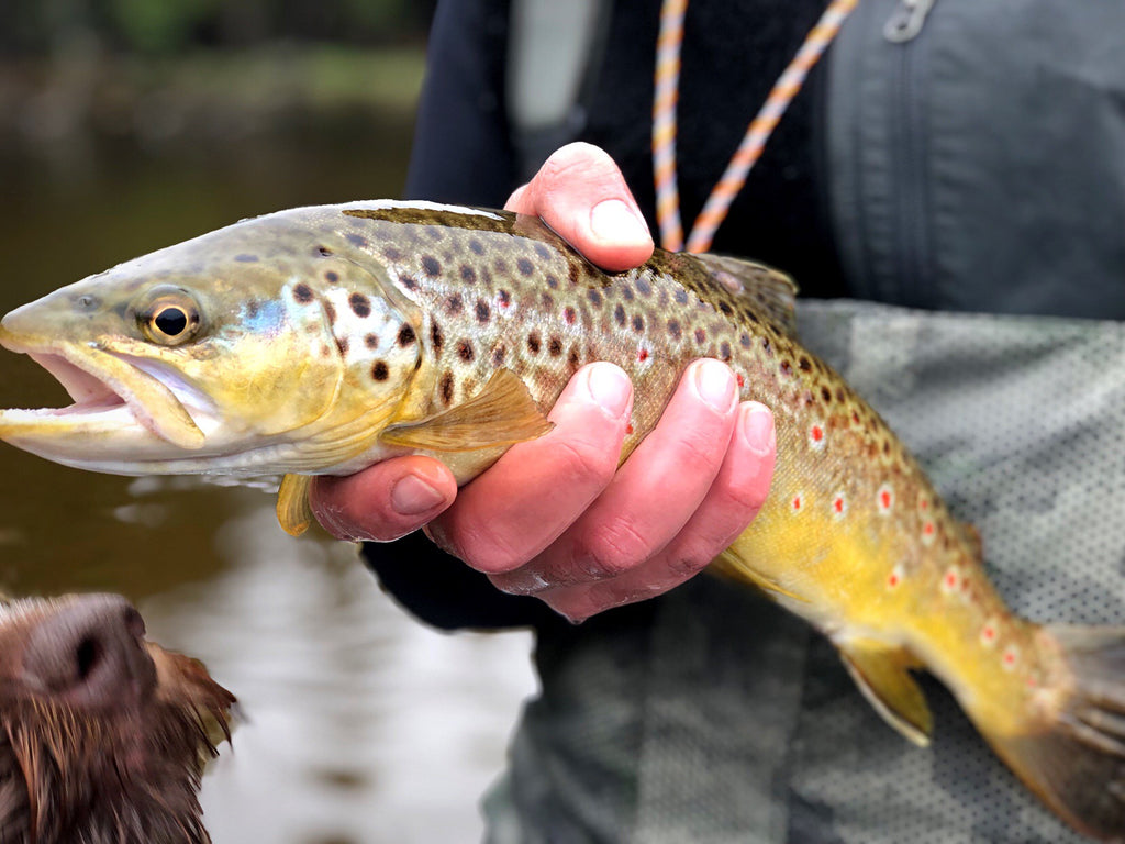 Fishing Report 5/11/19