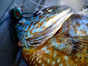The Northern Angler | Northern Michigan Fly Fishing – The