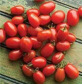 Cherry Roma Tomato Garden Seeds 30+ Seeds Rare Grown To Organic Standards Open Pollinated Heirloom Gardening
