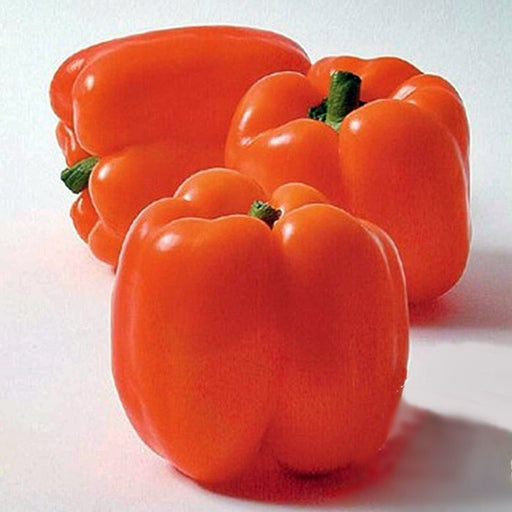 Horizon Heirloom Sweet Pepper Seeds
