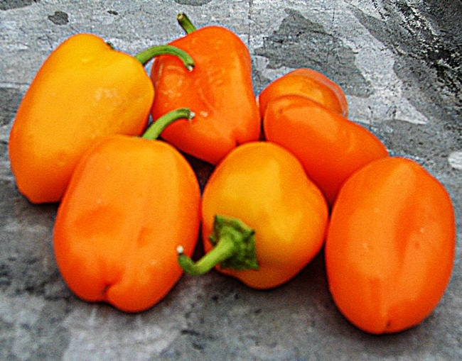 Mini Sweet Pepper Mix Seeds Open Pollinated Non-GMO Naturally Grown Open Pollinated Gardening