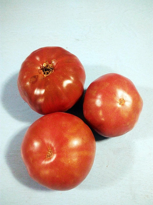Spudakee Tomato Heirloom Garden Seeds Non-GMO 30+ Seeds Grown To Organic Standards Open Pollinated Gardening