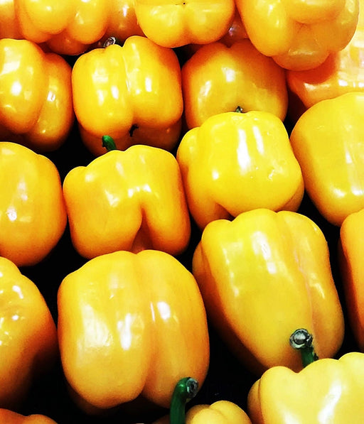 Sunbright Heirloom Sweet Bell Pepper Seeds