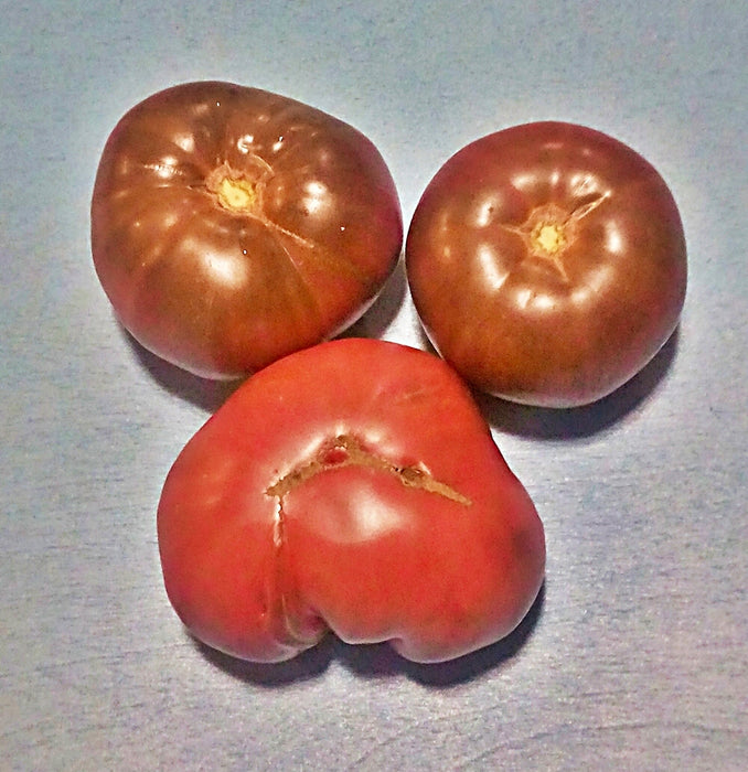 Black Brandywine Tomato Heirloom Garden Seed Non-GMO 30+ Seeds Incomparably Sweet Grown To Organic Standards Open Pollinated