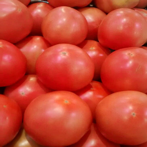 Bradley Tomato Heirloom Garden Seed Non-GMO 30+ Seeds Pink Slicer Grown To Organic Standards Open Pollinated Gardening