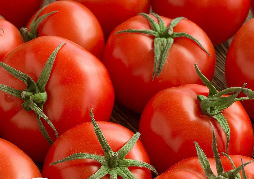 Campbell 33 Tomato Heirloom Garden Seeds Rare 30+ seeds Naturally Grown Open Pollinated