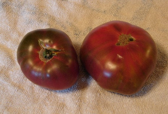 Black Krim Tomato Heirloom Garden Seed Non-GMO 30+ Seeds Grown To Organic Standards Open Pollinated Gardening