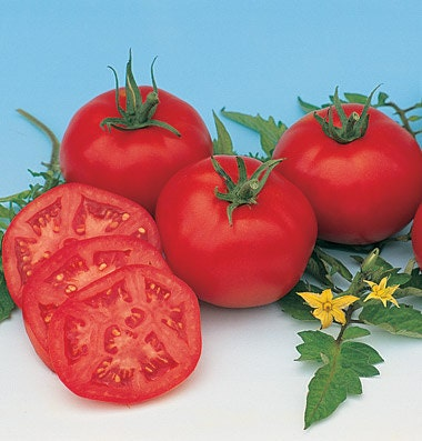 Moscow Tomato Heirloom Garden Seeds Non-GMO 30+ Seeds Developed in Idaho Local Favorite Old Fashion Flavor Outstanding Canner
