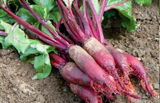 Beet Seeds Heirloom Collection Non-GMO Naturally Grown Open Pollinated Gardening Gifts for Gardeners