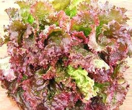 Red Sails Leaf Lettuce Heirloom Garden Seed Non-gmo 300+ Seeds Gourmet Fast Growing Heat Tolerant Open Pollinated Gardening