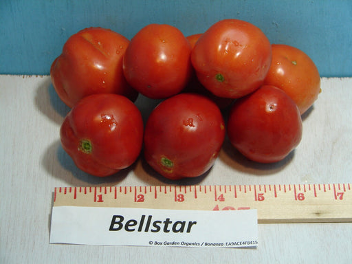 Bellstar Paste Tomato Heirloom Garden Seed Non-GMO - 30+ Seeds Grown To Organic Standards Open Pollinated Gardening