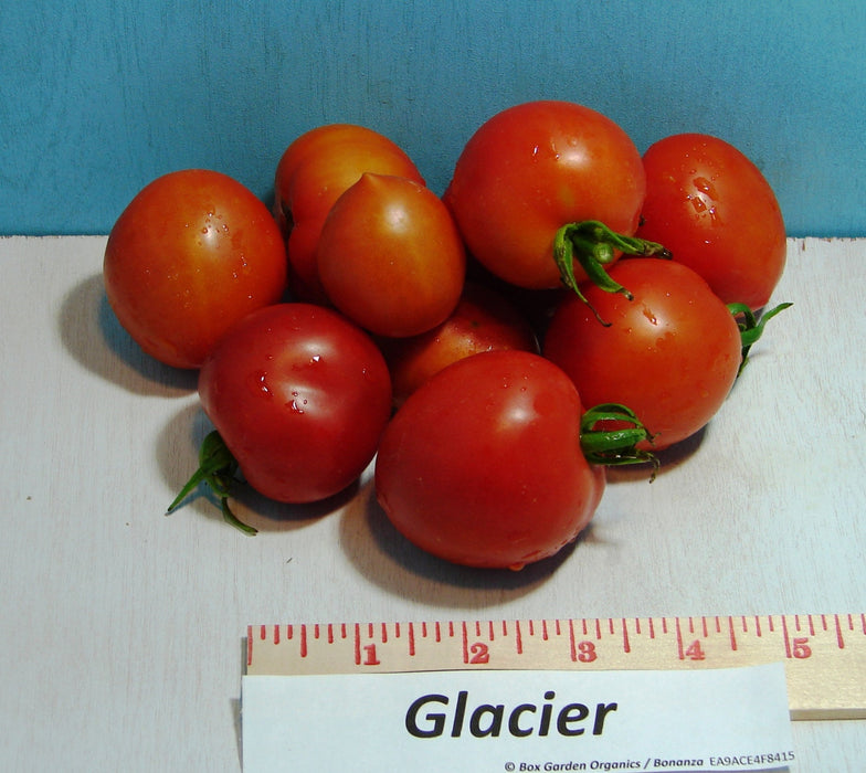 Glacier Tomato Seeds Heirloom Garden Seeds Non-GMO 30+ Seeds Early Season Grown To Organic Standards Open Pollinated