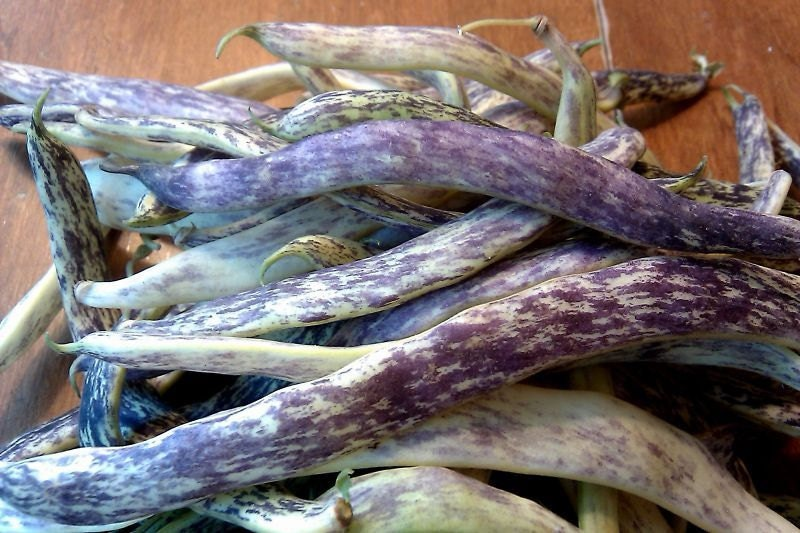 Dragon Tongue Heirloom Bush Bean Seeds