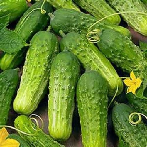 National Pickling Heirloom Cucumber Seeds Non-GMO Naturally Grown Open Pollinated