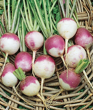 Purple Top White Globe Heirloom Turnip Seeds