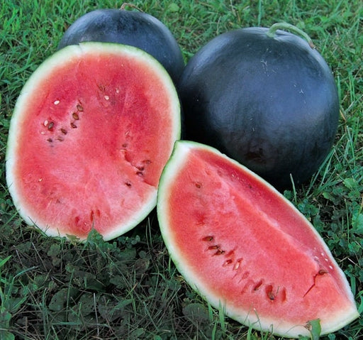 Blacktail Mountain Heirloom Watermelon Seeds