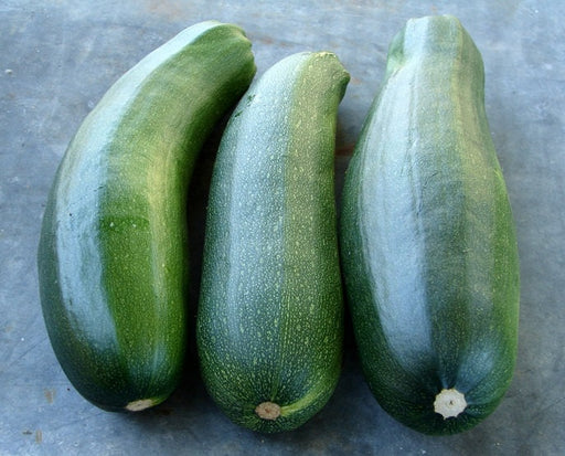 Black Beauty Zucchini Summer Squash Seeds Non-GMO - Naturally Grown Open Pollinated Heirloom Gardening