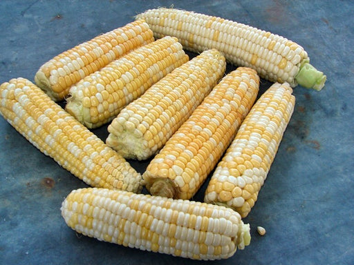 Double Standard Sweet Corn Garden Seeds Non-GMO Naturally Grown Open Pollinated Heirloom Gardening