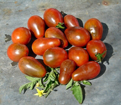 Chocolate Pear Tomato Heirloom Garden Seed Sweet Early Non-GMO Grown To Organic Standards Open Pollinated 30+ Seeds Gardening