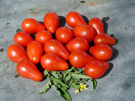 Austins Red Pear Tomato Heirloom Garden Seed  Non-GMO - Grown To Organic Standards Open Pollinated 30+ Seeds Gardening