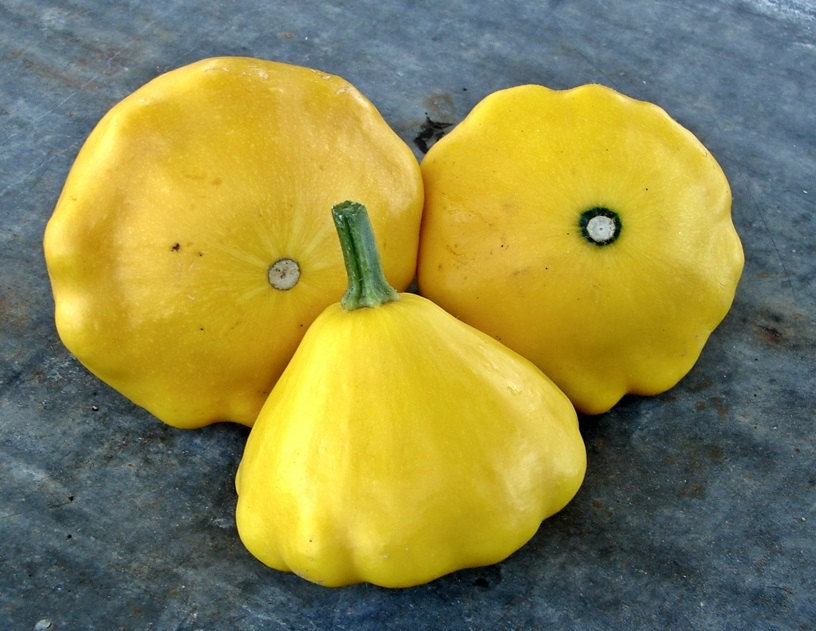 Yellow Scallop Summer Squash Heirloom Seeds