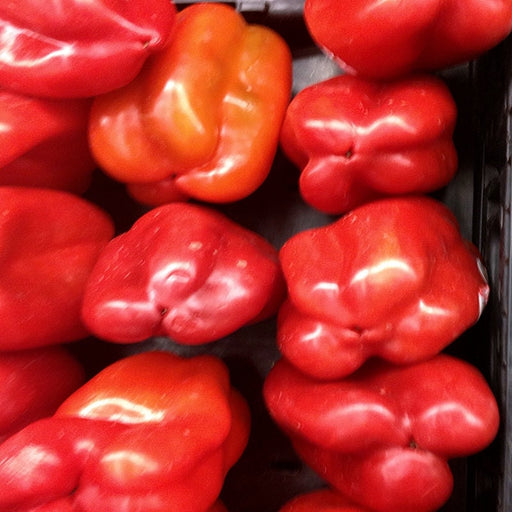 Big Red Heirloom Sweet Bell Pepper Seeds Open Pollinated Non-GMO -