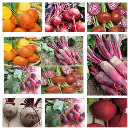 Beet Seeds Heirloom Collection  Gifts for Gardeners